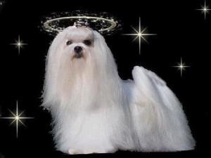 Dog 2 Rev